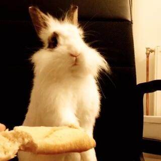 ('♀') 兔先森