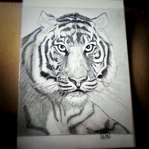 我的铅笔画,老虎,临