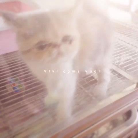美女与萌猫
