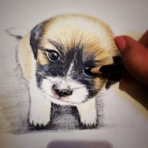 手绘彩铅画##彩色铅笔动物#nala cat