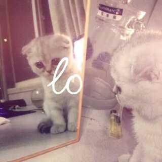 第一次照镜子竟然走小差😓#宠物#