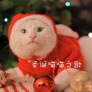 mimo酱的圣诞喵喵之歌🎵祝大家圣诞节快乐🎄🎅🎁🎉🎊(更多日常请关注微博:mimo酱的小星球🐾微信:lovecnwy💕)#宠物##圣诞节#