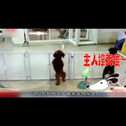 #60秒美拍# 《囧闻一箩筐》【萌狗见主人 快乐跳起舞】狗狗