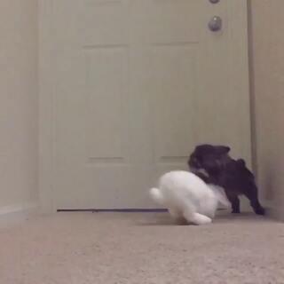 黑色兔子你闹哪样