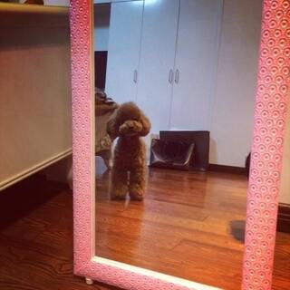 #宠物##我的宠物萌萌哒##宠物泰迪##家有宠物#第一次这么近距离照镜子,被里面的自己吓坏了…😂