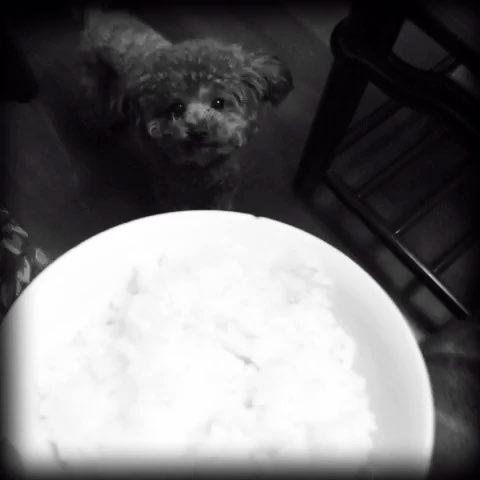 一碗白米饭简笔画