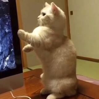 #萌猫咪##宅在家#我就摸摸不会碰坏的!………………哎呀!我可什么都没做呀!真的!我发四!