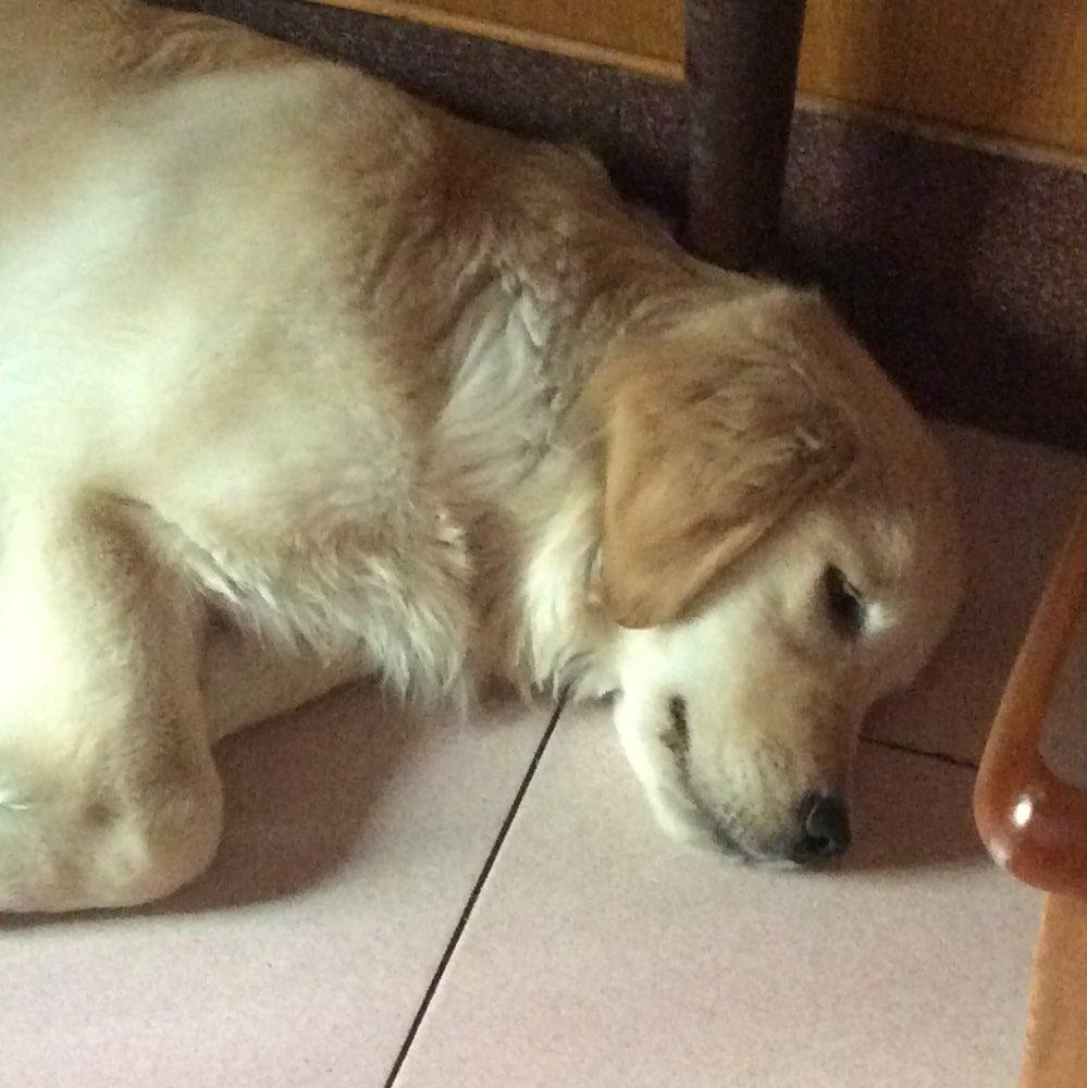 累趴了的萌图动物