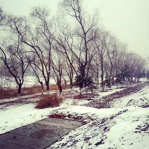 你的城市下雪了吗# 我爱这白茫茫的一片,为了感受你的抚慰,我迎着你图片