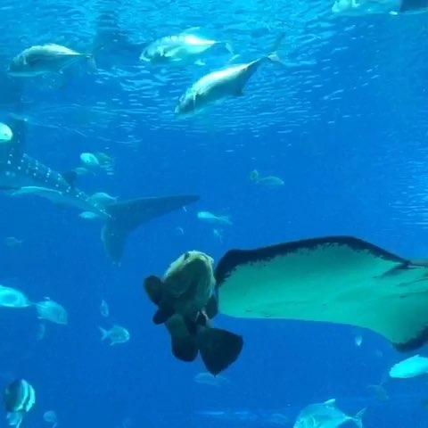 鲸鲨简笔画