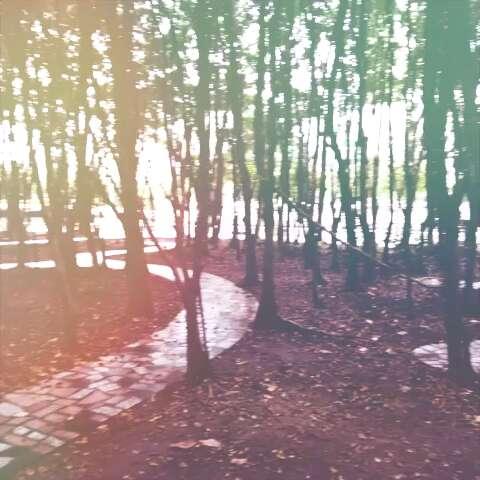 下雨天,世界名曲和树林迷宫更配喔