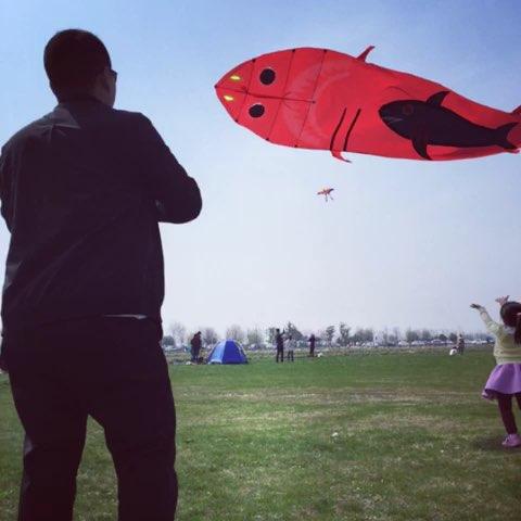 春天 放风筝图片