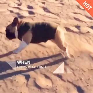 摔了个狗吃屎