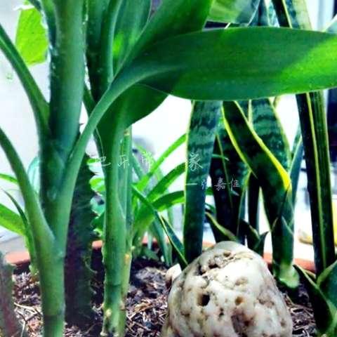微观植物怎么做