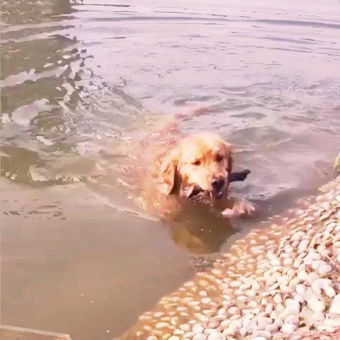水里动物图片大全