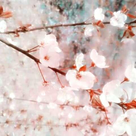 郑航美景~加之鹤壁春天