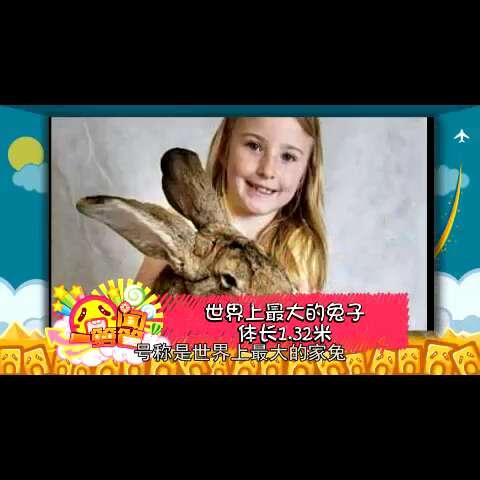 #囧闻一箩筐#【世界上最大的兔子体长1.32米】这长疯了的兔