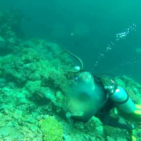 壁纸 海底 海底世界 海洋馆 水族馆 桌面 480_480