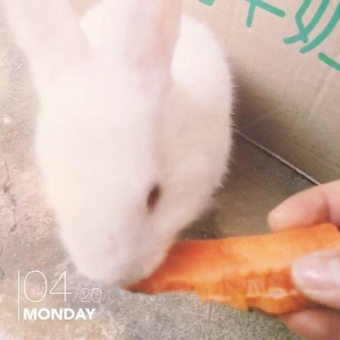 用萝卜做动物造型简单