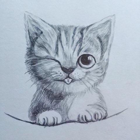 铅笔画小萌猫