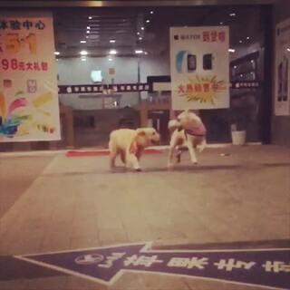 #宠物慢动作大赛##宠物#喜欢开心的你们😘😘#随手拍##微笑#