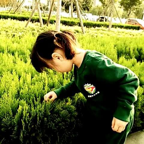 幼儿园植物手工制作风景图片
