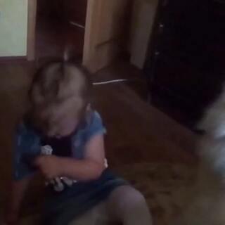 #宠物间的有爱瞬间##宠物##宝宝#萨摩和可爱小萝莉玩亲亲🙈🙈🙈