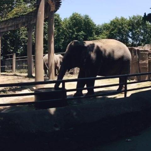 小朋友假日里,去动物园看动物.嘿嘿!