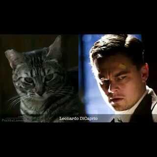 猫咪也有一张名人脸