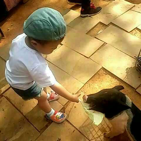 小朋友喜欢小动物