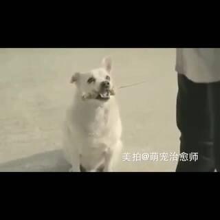 一段人与狗的奇妙故事😂#宠物##人宠大合唱##美拍新人王#对狗狗好一点,狗狗就会加倍回报你😁