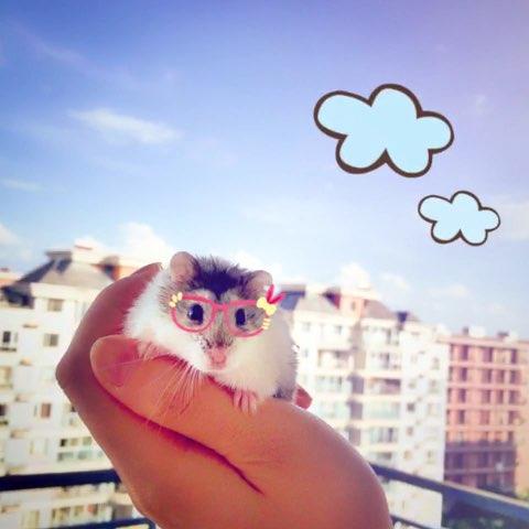 小仓鼠委屈表情包 小仓鼠委屈表情包分享展示