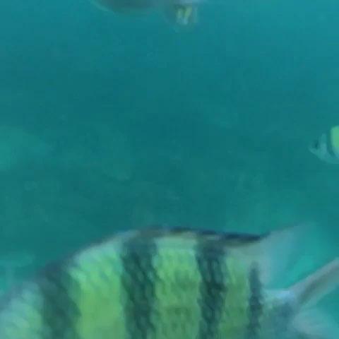 壁纸 动物 海底 海底世界 海洋馆 水族馆 鱼 鱼类 480_480