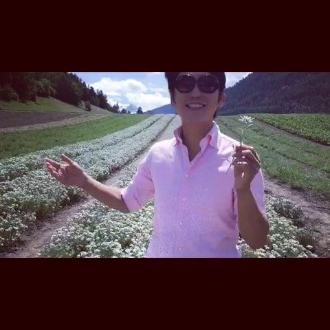 雪绒花到底是瑞士的国花还是奥...