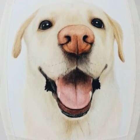 手绘彩铅画#手绘可爱拉布拉多狗狗.画艺坊原创手绘.