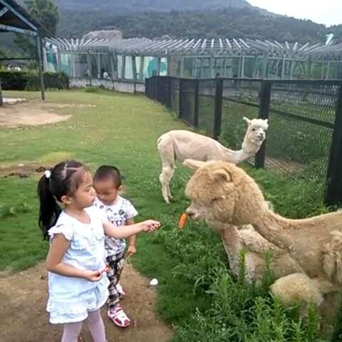 动物园#和#动物#互动,喂羚羊吃胡萝卜