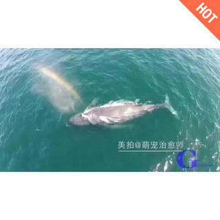 Wow~鲸鱼喷彩虹<span class=