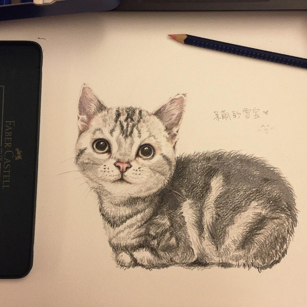 手绘##手绘彩铅画##猫##美短#雪宝的第一张