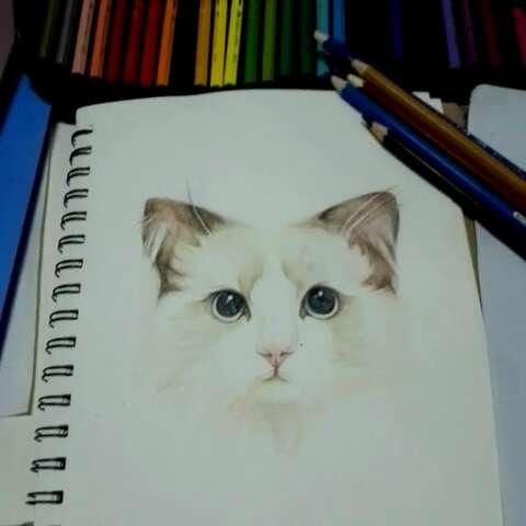手绘彩铅画##猫咪##喵星人##我爱画画