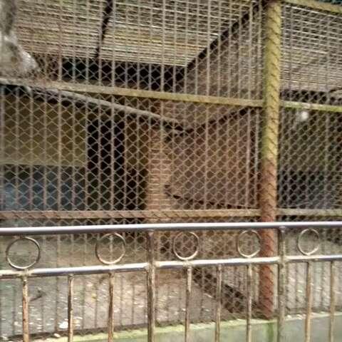 带小孩来个旧动物园看猴图片