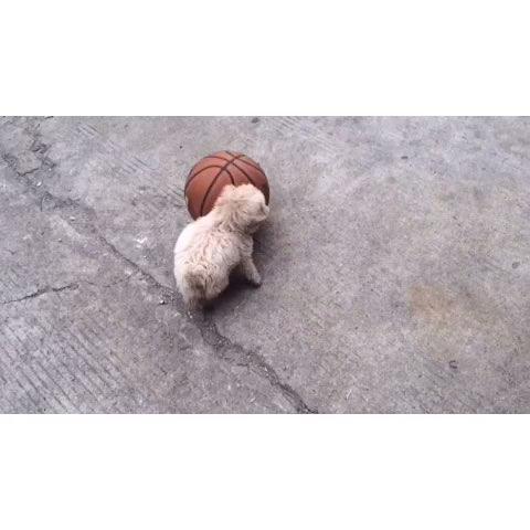 狗狗玩球图片