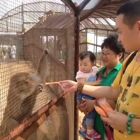 野生动物园喂猴子