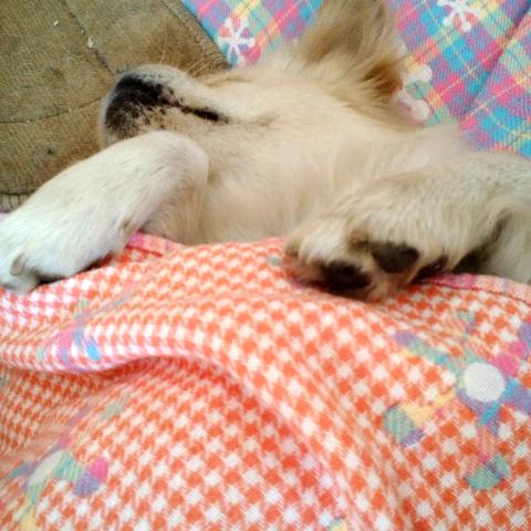 动物抱着睡的头像