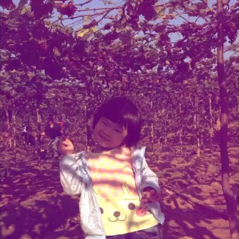 带涵涵参加幼儿园活动.摘葡萄橘子