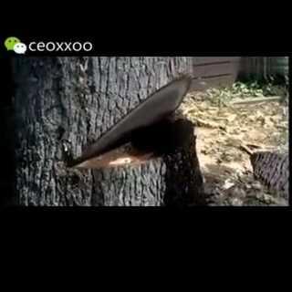 #一起来讲鬼故事#被砍后一直流血,难道这是所谓的树精么?
