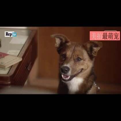#宠物#主人公把器官捐赠给了别人,狗狗却一眼就认出来。泪奔了。。💘💘💘