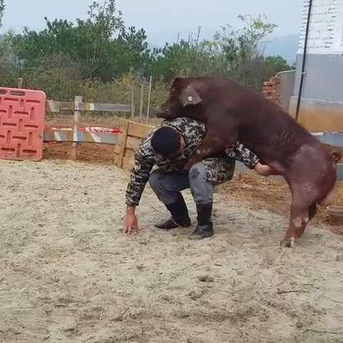 动物站立走路分解
