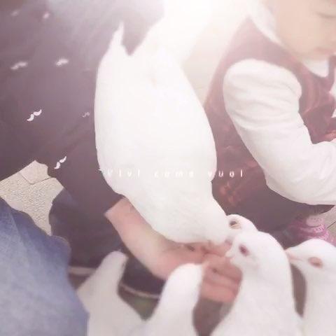 白鸽- 去年樱花树下的美拍