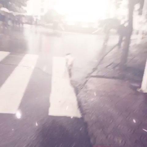 在雨中看见那只狗全身湿漉漉