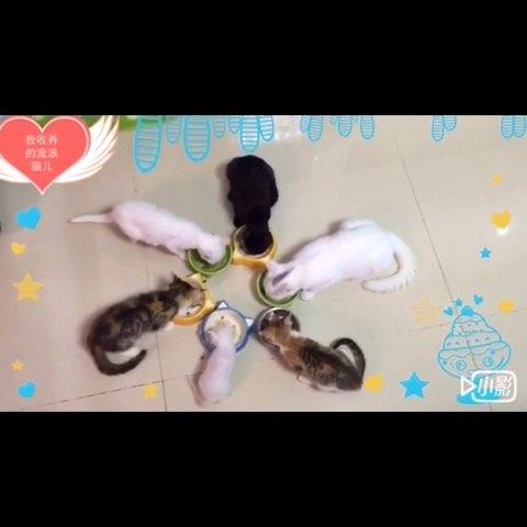 苏州的朋友喜欢小动物并且意向收养流浪猫狗可以我微信25151413,也